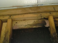 EXTREME Mold Growth